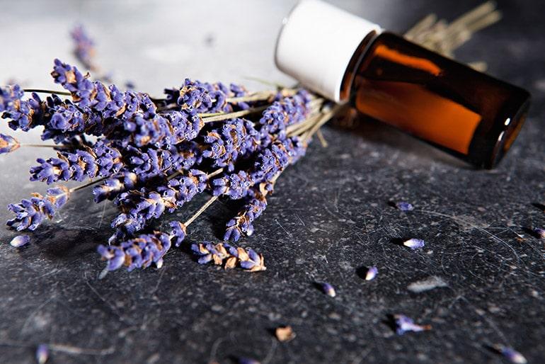 L'huile essentielle anti mouche, un répulsif naturel pour la maison